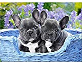 DIY 5D Diamond Painting Kit,French Bulldog Full Drill Arts Craft Round Diamond Painting by Number Cross Stitch Embroidery,for Home Wall Decor Adults and Kids (12x16 inches)