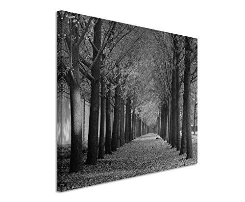 50x70cm Leinwandbild schwarz weiß in Topqualität Herbst Allee Gingkobäume