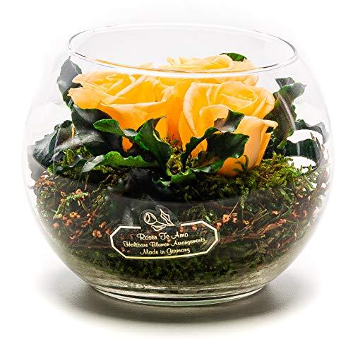 Rosen-Te-Amo Stilvoller Blumenstrauß aus 3 konservierte pfirsichfarben Blumen in der Vase; Infinity Rosen im Glass: schön handgefertigt aus 100% echtes Bindegrün - 3 Jahre haltbar ohne Wasser