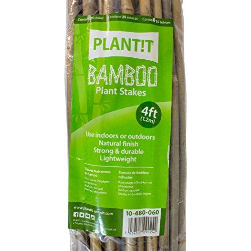 PLANT !T 10-480-060 Estacas de bambú, Paquete de 25 Unidades, Beige, 122x3x6 cm
