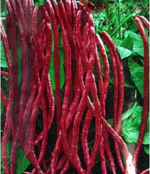 Schlussverkauf!!! 20 Samen rote Bohnen Samen für Hausgarten Outdoor-Anlage