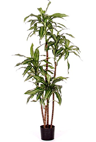 Verdevip Dracena Fragrans variegata–árbol Artificial (arredo Interno con Troncos...