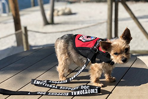 Emotional Support Dog Leash - Great Identification with or Without an Emotional Support Animal Vest - Includes Five ESA Information Cards