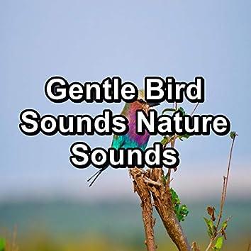Gentle Bird Sounds Nature Sounds
