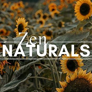 Zen Naturals 1 HOUR - Zen Music for Deep Sleep