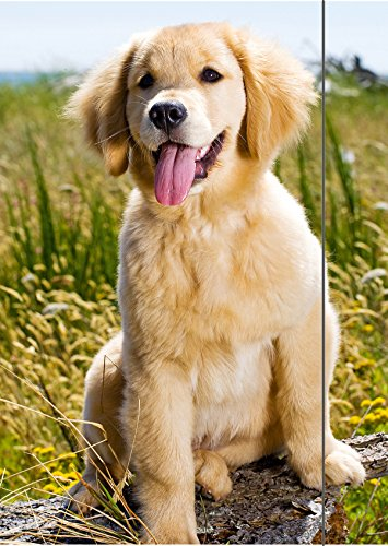 RNK 45310 tekenmap hond, 310 x 440 mm, A3