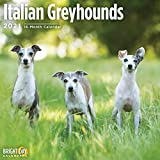 2021 Italian Greyhounds Wall C...
