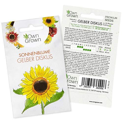 Sonnenblumen Saatgut Gelber Diskus (Helianthus annuus): Premium Sonnenblumen Samen, Sonnenblume Saat zur Anzucht von ca. 20 Sonnenblumen Pflanzen – Insektenfreundliche Blumensamen von OwnGrown