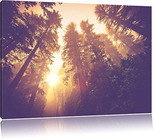 Blick in die Baumwipfel, Format: 120x80 auf Leinwand, XXL riesige Bilder fertig gerahmt mit Keilrahmen, Kunstdruck auf Wandbild mit Rahmen, günstiger als Gemälde oder Ölbild, kein Poster oder Plakat