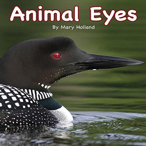 Animal Eyes copertina