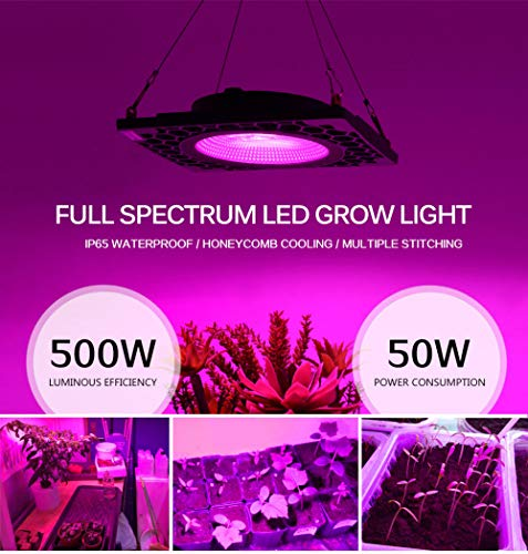 Luz de la planta Luz de crecimiento de espectro completo 50W Led Grow Light Cob Full Spectrum Led Growing Lamp 500W Alta Eficiencia Luminosa Fito Lámparas Para Plantas Grow Carpa Invernadero