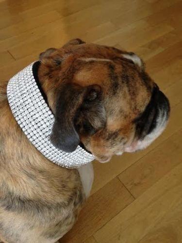 Blinged Out Pets Strasssteinen Out Huge Black Strass Hund Kragen Passt Hals Größen 43,2–66cm, 21-24 inch Necks, Schwarz