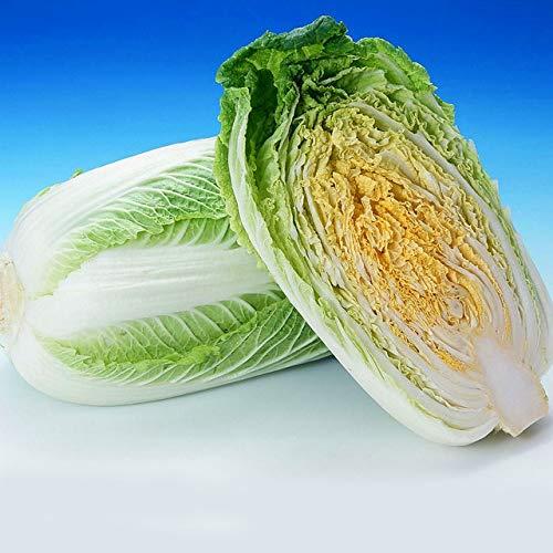 AGROBITS 200 graines/Hot Pack! Délicieux chou graines faciles à cultiver - Graines de légumes verts nourrissants ica Pekinensis s: chou A9