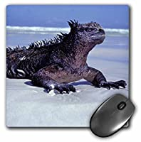 Marine iguana Galapagos Islands Ecuador - Mouse Pad 8 by 8 inches (mp_37622_1) [並行輸入品]