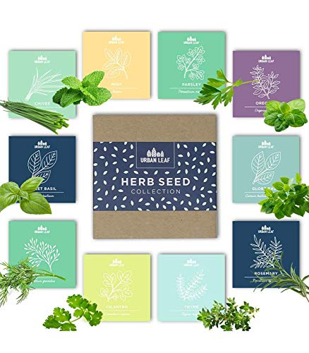 Herb Garden Seeds Kit for Planting | Non GMO | 10 Herb Seed Packets for Gardening incl Basil Mint Cilantro Chives | Indoor Herb Gardening Starter Seeds Gifts