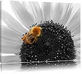süße Biene auf großer Sonnenblume schwarz/weiß auf