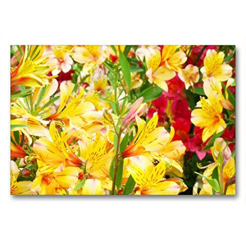 Premium Textil-Leinwand 90 x 60 cm Quer-Format Gelbe und rote Inkalilien | Wandbild, HD-Bild auf Keilrahmen, Fertigbild auf hochwertigem Vlies, Leinwanddruck von Gisela Kruse