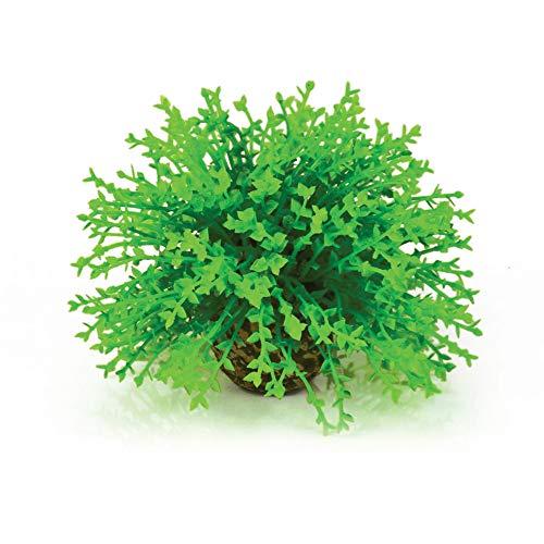 Oase Blumenball -Aquarium-Deko in Form einer japanischen Moosart, Zubehör fürs Aquarium-Becken, 360 Grad Modell, Grün