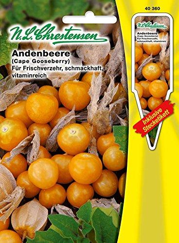 Chrestensen Andenbeere 'Physalis peruviana' für Frischverzehr, schmackhaft, vitaminreich