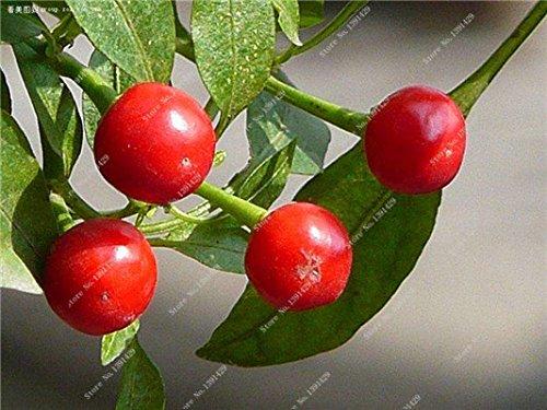 Cerise poivre Graines Bonsai plantes ornementales délicieux Chili Capsicum semences Diy jardin Croissance domestique naturelle 300 semences 11