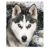 Moslion Soft Cozy Throw Blanket Siberian Husky Dog in The Snow Fuzzy Warm Couch/Bed Blanket for Adult/Youth Polyester 50 X 60 Inches(Home/Travel/Camping Applicable)