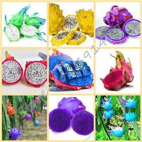 50pcs / sac rares 9 types de graines pitaya, très belle graines de fruits graines de fruits de dragon mélange