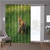 YUAZHOQI cortinas opacas para ventana, zorro, zorro con cola mullida en hierba, 125 x 220 cm de ancho para proteger la sala de estar (1 panel)