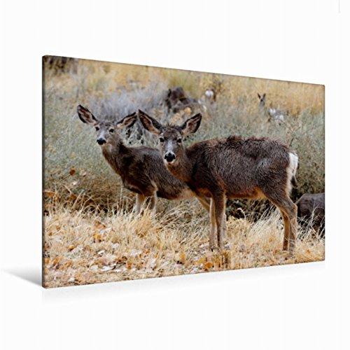 CALVENDO Premium Textil-Leinwand 120 cm x 80 cm quer, Maultierhirsch   Wandbild, Bild auf Keilrahmen, Fertigbild auf echter Leinwand, Leinwanddruck: Tiere der Great Plains Tiere Tiere