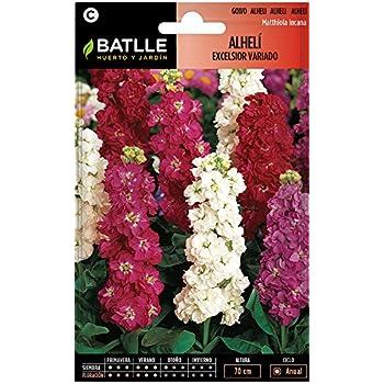 Semillas de Flores - Alhelí Excelsior gigante variado - Batlle ...