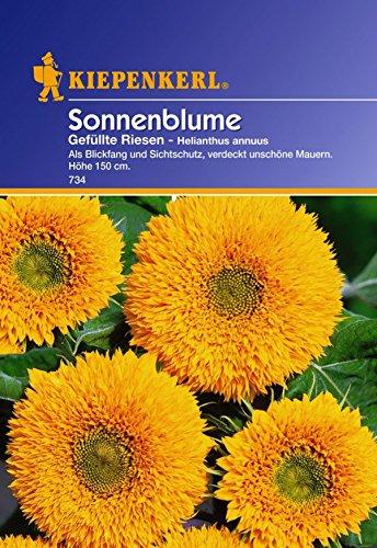 Kiepenkerl, Sonnenblumen, Helianthus annuus Gefüllte Riesen
