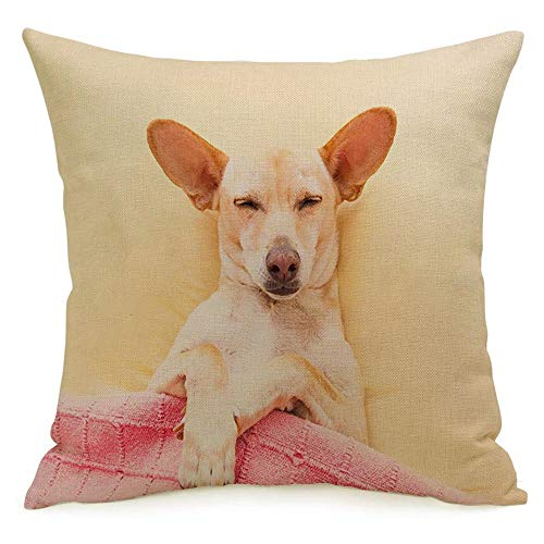 Starojun Decorative Throw Pillow Cover Best Chihuahua Comfortable Dog Headache Hangover Sleeping Bed Animals Wildlife Healthcare Medical Soft Linen Cushion Covers 20 x 20 Inches for Couch Car Bedroom
