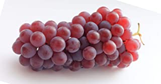 Delaware Seeded Grape Seeds UPC 600188195736 + 2 Free Plant Markers (50)