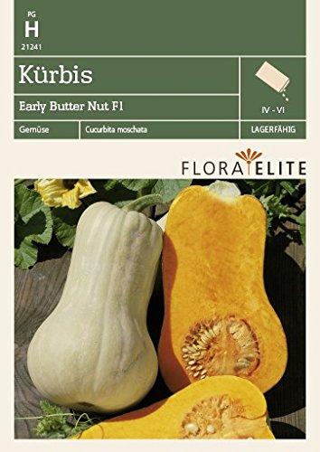 Flora Elite 21241 Kürbis Early Butter Nut F1-Hybride (Kürbissamen) [MHD 06/2020]