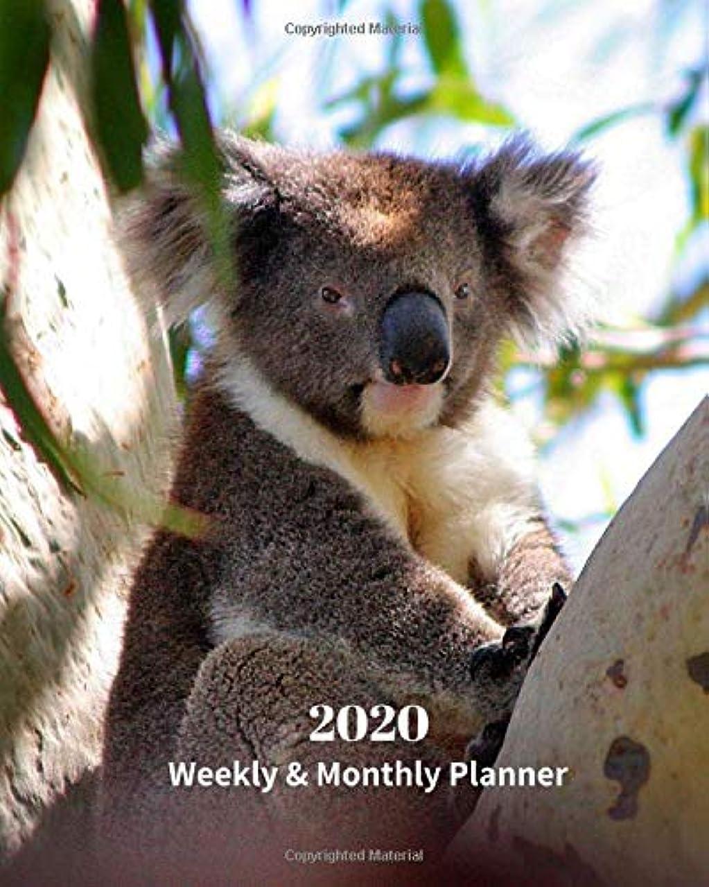 バンカー潮リスト2020 Weekly and Monthly Planner: Baby Koala - Monthly Calendar with U.S./UK/ Canadian/Christian/Jewish/Muslim Holidays– Calendar in Review/Notes 8 x 10 in.-Wildlife Koala Bear Nature Australia