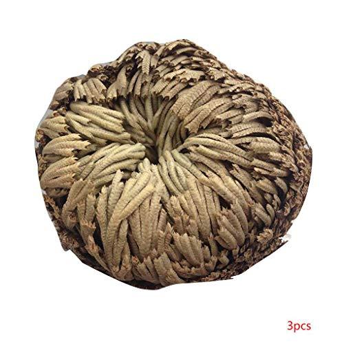Gankmachine Praktische Live-Auferstehung Pflanze Rose von Jericho Dinosaurier-Pflanze Air Fern Spike Moss Selaginella 3 Stück