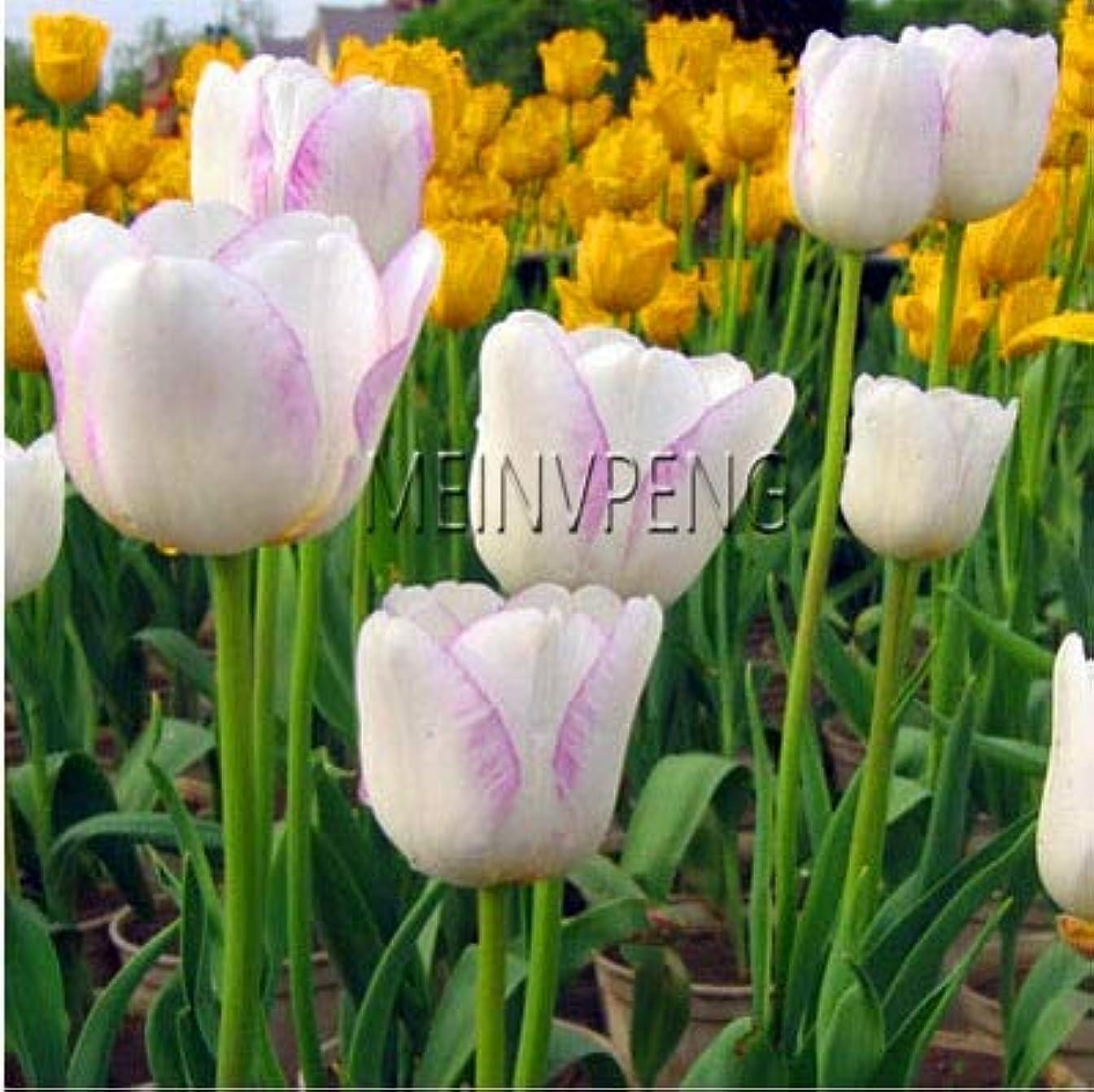 Casavidas Time-Limit!! Bonsai, Not Bulbs, Hydroponic Bonsai Flower Bonsai, Gard Tion Bonsai Flower,120flores: 16
