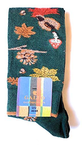 Gallo, calze da uomo, autunno, foresta