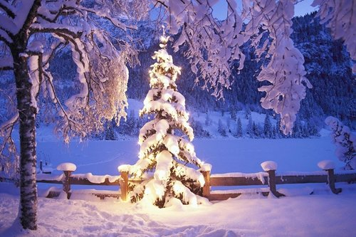 Glowing Christmas Tree in Winter -b - Art Print Poster,Wall Decor,Home Decor(36x24inches)
