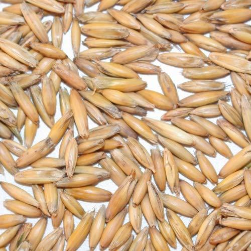 BIO Hafer im Spelz/Futterhafer 4kg - direkt vom Bauernhof - aus kontrolliert biologischem Anbau