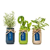 Thoughtfully Mason Jar Herb Garden | Contains Rosemary, Basil and Sage...