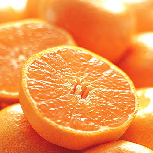 国産 温州みかん 10kg(共選 秀品) 柑橘類 みかん ミカン 蜜柑 果物 フルーツ お取り寄せ