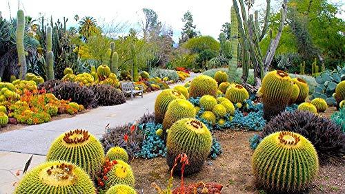 RIII Diamantmalerei-Kits für Erwachsene Diamantmalerei Cactus Botanical Garden 40X50Cm Diamant RondGift