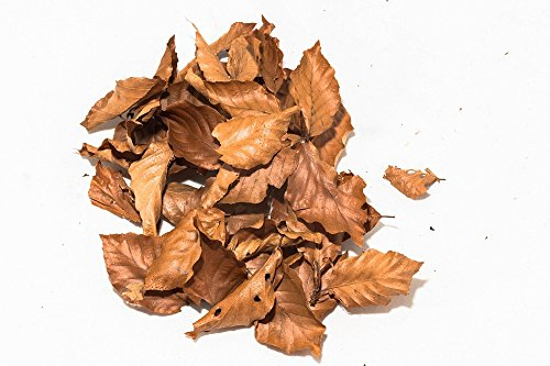 Nano Buchen Laubblätter (braun), 20 Blätter- Garnelen-, Wasserschnecken- und Krebsfutter