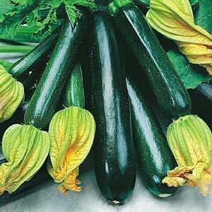 Graines et semences Fermes Courgette Black Beauty D149QU (vert) 55 Graines Heirloom