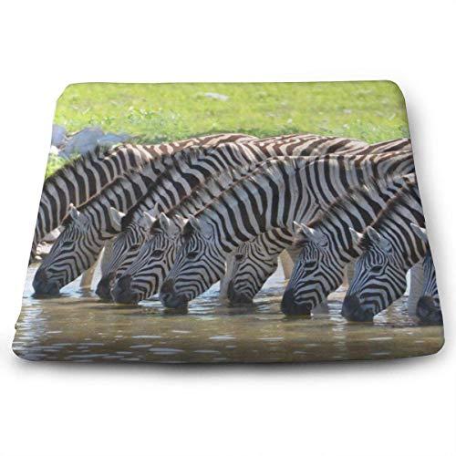 wusond Cojines de Asiento Cuadrados Funny Zebra Drinking Cojines de Espuma viscoelásticos Premium y Confortables