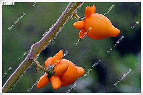 150pcs / sac Melon d'or bio Graines Juicy délicieux fruits légumes Bonsai pot Plantons pour Mini Jardin Facile à cultiver