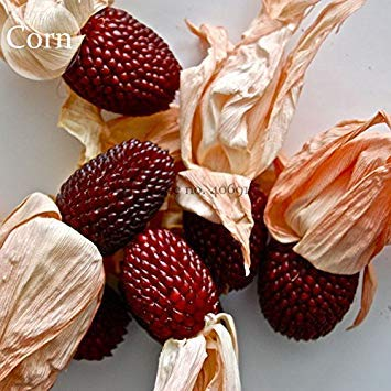 Heirloom Red Popping Corn, 8 graines, e3932 fraise de maïs
