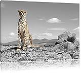 stolzer Gepard schwarz/weiß Format: 100x70 auf Leinwand,