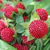 Fruchtsamen Bonsai indische Erdbeere Baumsamen seltene Frucht Bonsai-Baum rot köstliche indische Erdbeere Samen Garten 50 Stück W072