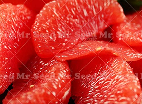 20pcs Pomelo Citrus Bonsai Pflanze orange Fruchtpflanzen Grapefruit Seltene Frucht für Hausgarten-DIY Pflanz Bonsai